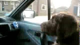 Muiter in de auto