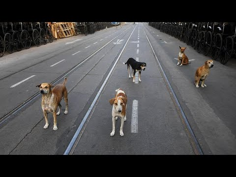 Бездомные животные скучают по прохожим photo