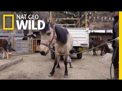 A Horse Walks for the First Time in a Year | Wizard of Paws