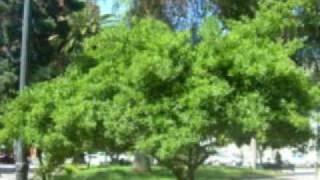 Salmo 12 - Salmos Cantados en Vivo - Agua Viva de Lourdes