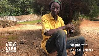 JAMAICA GOOD LIFE - EP79 - Woman Farmer, Rondie and Baba Ready to Go To Bush