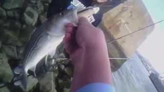 Striper Fishing Vallejo, CA