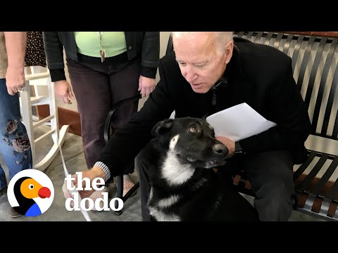 Rescue Puppy Gets Adopted By Joe Biden   The Dodo