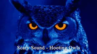 Scary Sound - Hooting Owls