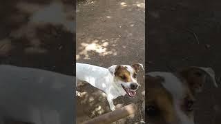 Vcs já viram um cão,  com um sorriso assim?muito engraçado.