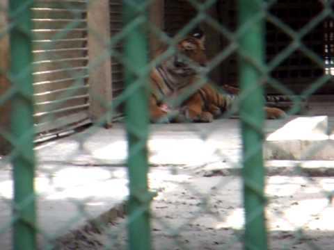 アキーラさん訪問!バングラデシュ・ダッカ動物園!Dahka-zoo,Bangladesh