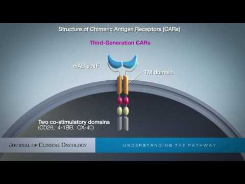 Are All Chimeric Antigen Receptors Created Equal?