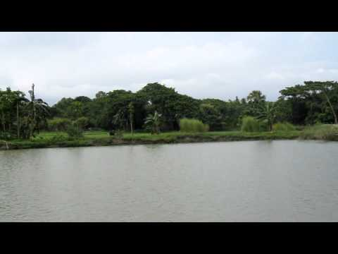 fish-breeding pond rana bangladesh 1