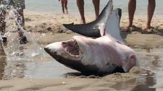 zachrana žraloka