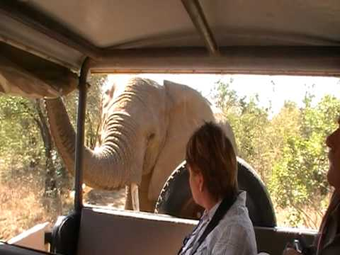 Imfolozi NPsouth africa migrating elephants inspecting jeep  MOV04F.MOD