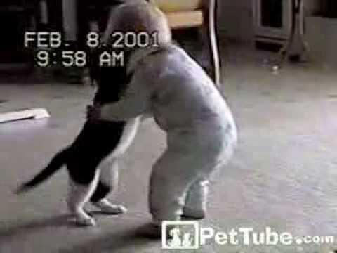 Zapasy kota z niemowlakiem
