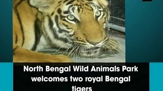 North Bengal Wild Animals Park welcomes two royal Bengal tigers - ANI News