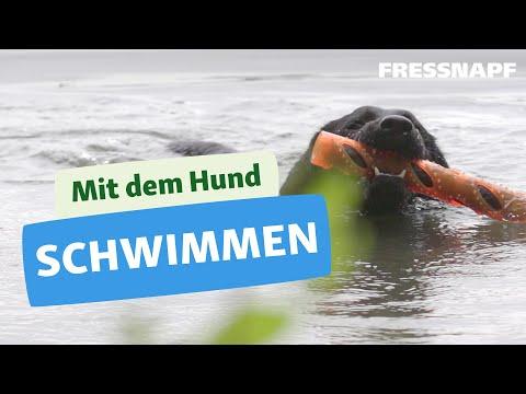 Schwimmen mit Hund - Tipps für den perfekten Badespaß