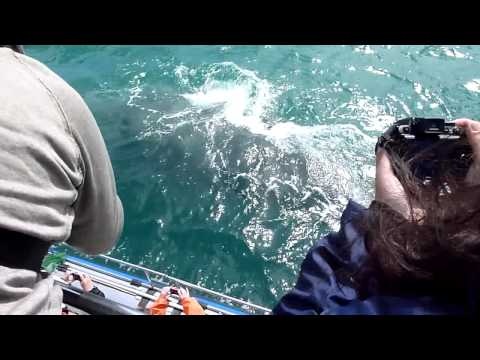 Holidays in South Africa: Whale watching in Hermanus