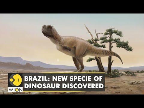 Kurupi Itaata- A New dinosaur species discovered in Brazil | WION English News