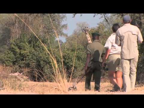 Mwamba Bushcamp – walking safari | Zambia | Expert Africa