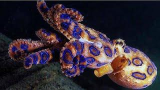 10 Gevaarlijkste Dieren in de Oceaan!