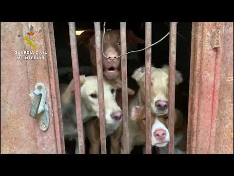 La Guardia Civil interviene 22 perros en estado deplorable y  restos cadavéricos de otros 7