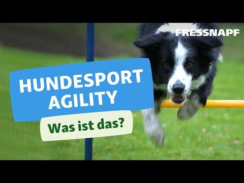 Hundesport Agility -  Was ist das?