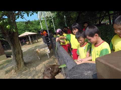 20171003壽山動物園(餵山羊1) - YouTube