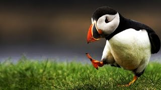 Funny Animals GIFs / VINES remix MONTAGE COMPILATION with SOUND