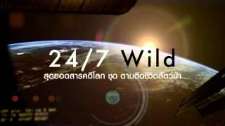 สุดยอดสารคดีโลก  : ตามติดชีวิตสัตว์ป่า ตอน หมี 3 ตัว (8 ธ.ค.57)