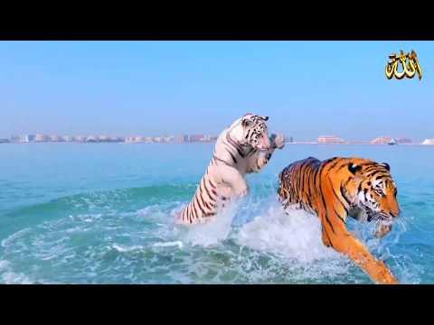 نشيد : سبحان الله ( فيديو كليب )  SUBHAN ALLAH / Iqbal Hossain