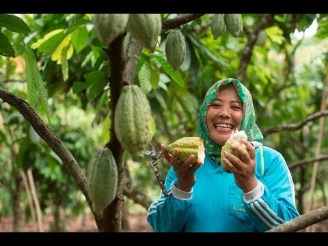 Cocoa Life's External Advisory Council in Indonesia