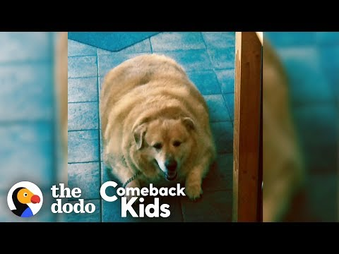 Watch What Happens When This Dog Loses 100 Pounds! | The Dodo Comeback Kids