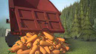 Carrot Crazy