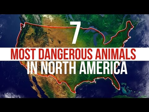 7 Most Dangerous Animals in North America
