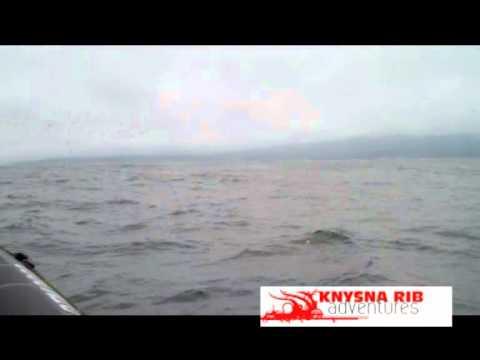Knysna Rib Adventure – Video 3
