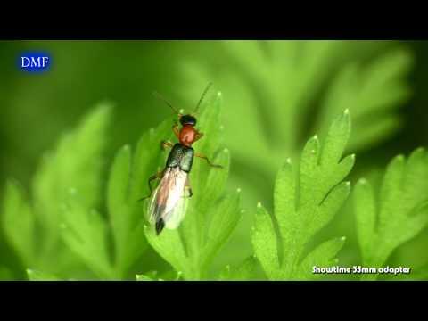 [美麗台灣] 昆蟲花草間 DMF SHOWTIME - YouTube