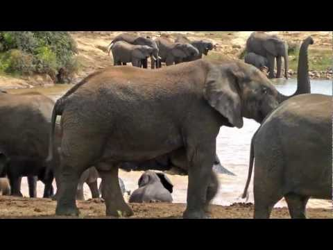 Woodall Country House and Spa – Addo Elephant National Park, South Africa