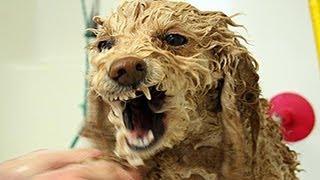 Lustige Hunde hassen es zu baden