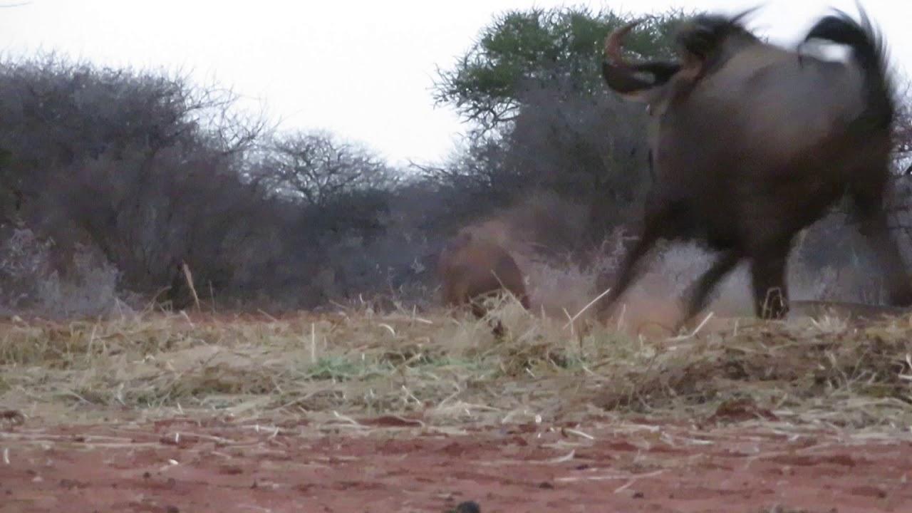 Safaris de Caza con Arco