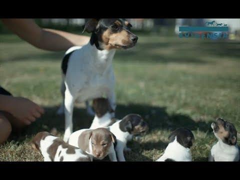 Asiantuntijan vinkit: Näin hankit koiranpennun vastuullisesti
