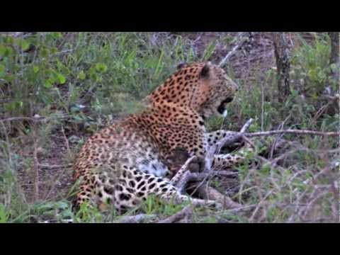 10-minute Trip to Hoedspruit & Cape Town – South Africa