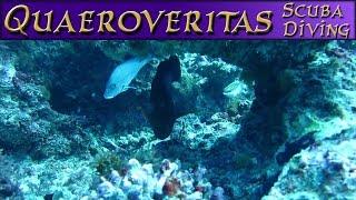 Musgrave Island scuba diving montage