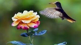 "Poema ""Sou a Natureza"" ""Poeta Wilson Alves"""