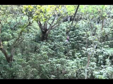 Canopy at Mombacho Volcano in Nicaragua II