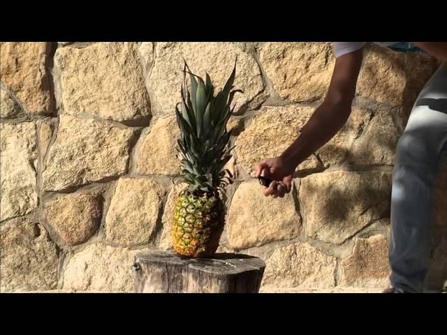Feli and the LemonShakers - ELLA (Official Music Video)