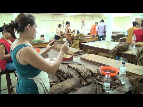 Proceso de producción de Puros Premium en Nicaragua Plasencia Cigars