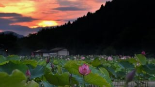 Magical Night at Lotus Heaven