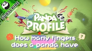 Panda Profile  Q&A Ep8 How many fingers does a panda have? | iPanda
