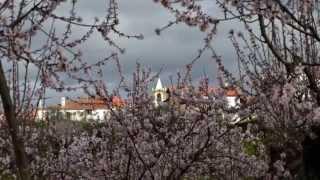 Vá Para Fora Cá Dentro - Amendoeiras em Castelo Melhor, no Alto Douro