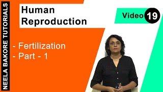 Human Reproduction - Fertilization - Part - 1 width=