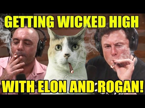 Getting Wicked High With Elon Musk & Rogan!