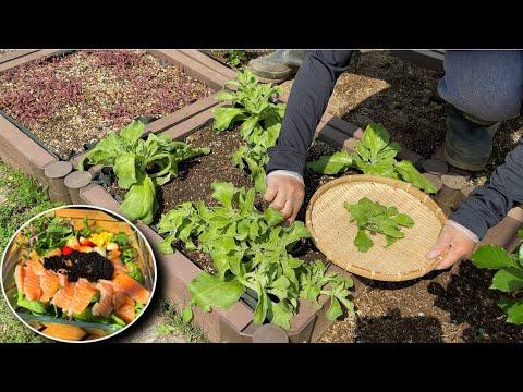 Rau kim cương trộn kiểu này thì siêu ngon - hái dâu, bông cải, bông san hô, đuôi phụng tím #913