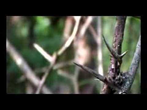 lisandro-aristimuno-el-arbol-caido-lisandrospain